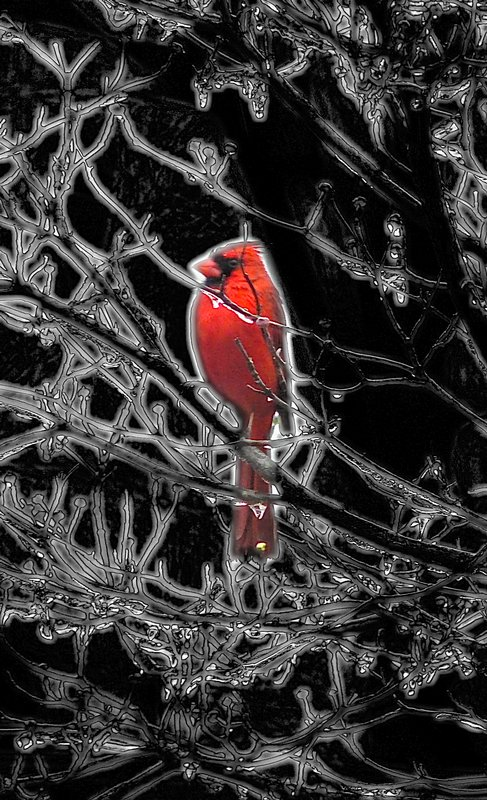 - Cardinal in an icy tree - by Tony Karp - Techno-Impressionist Museum - Techno-Impressionism